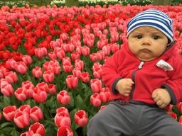 Tulips galore in Keukenhof