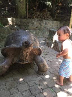 Giant tortoises in Seychelles