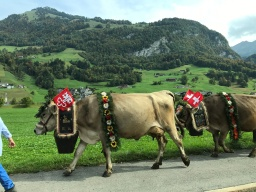 Exploring Switzerland 2017 – of suspension bridges, natural pools and waterfalls, watch museums, cow parades, medieval villages, Roman and pumpkin festivals